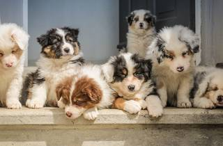 Puppies in a row