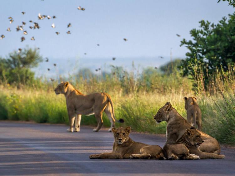 Kruger, South Africa