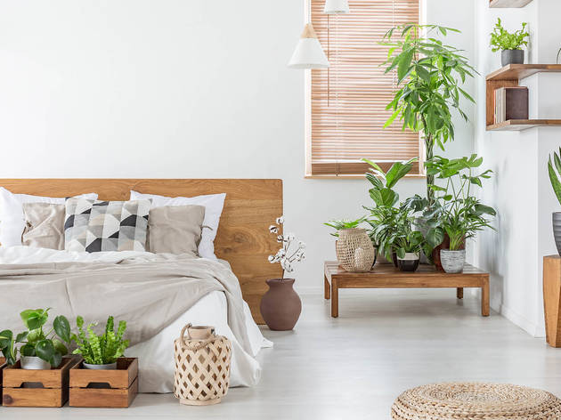 The best indoor plants and where to get them