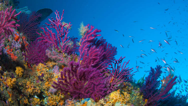 The beautiful colors of the sea
