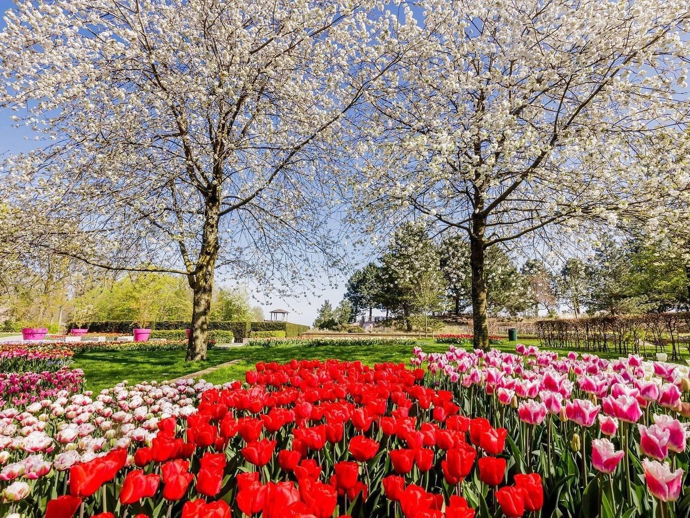 Photo: fb.com/visitkeukenhof