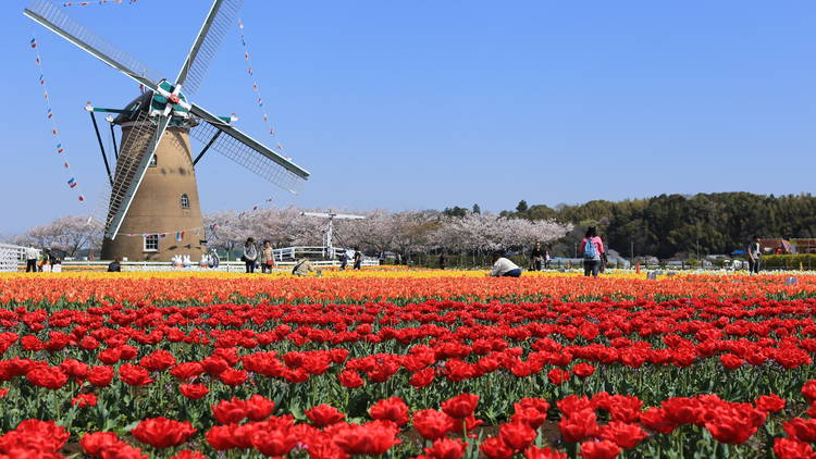 Sakura City