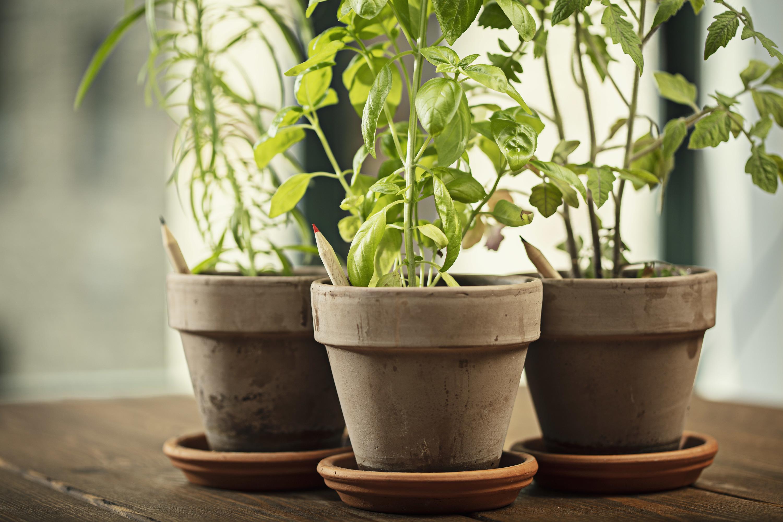 Lapiceros de flores y aromáticas para plantar de Sprout World