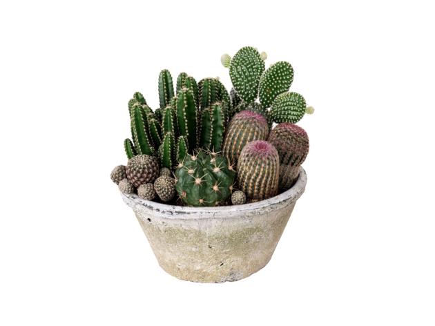 Centro de cactus para regalar el Día de la Madre