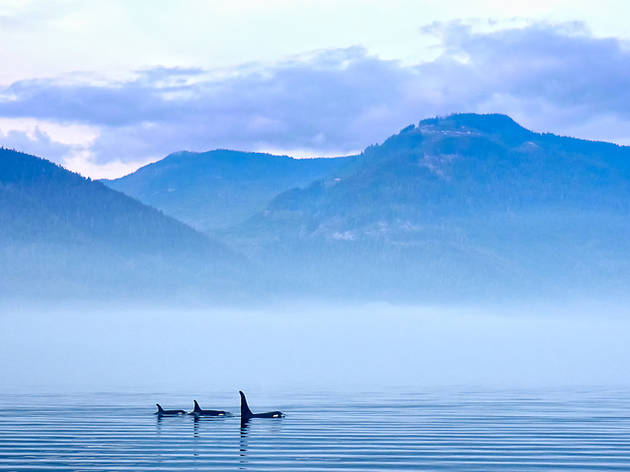 Whales near Vancouver