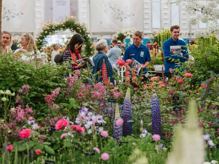 The Chelsea Flower Show starts today. In autumn!