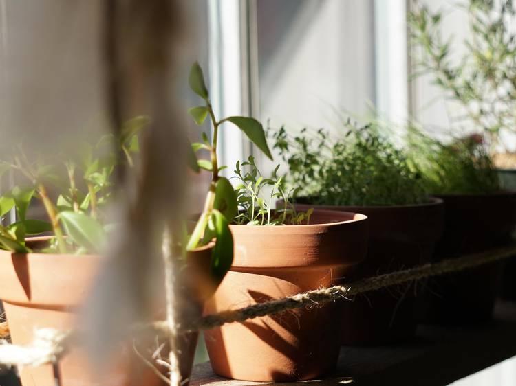 Como ter uma horta em casa