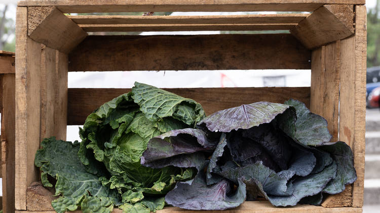 hortalizas frescas