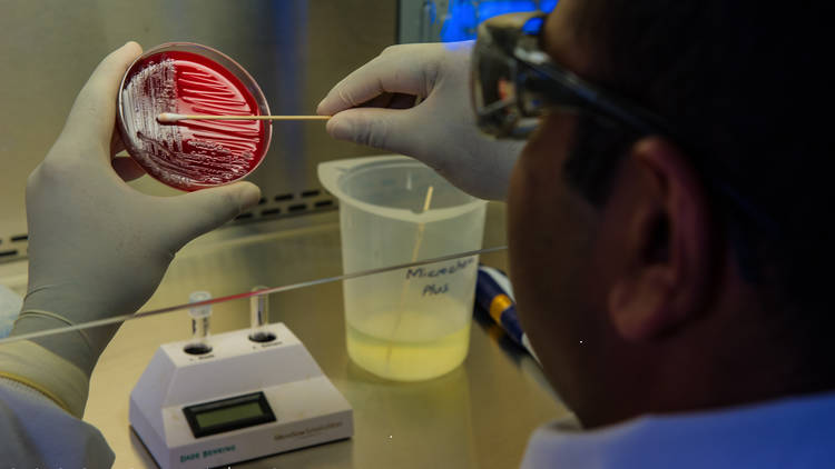 Swab testing for coronavirus