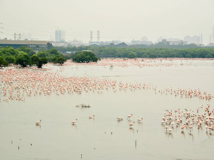 A record number of flamingos are painting Mumbai pink