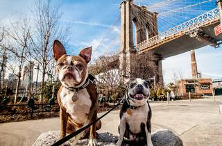 dogs nyc