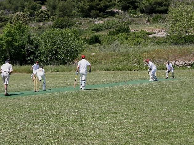 Vis cricket, kriket