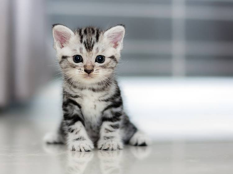 7 mitos y realidades acerca de los gatos