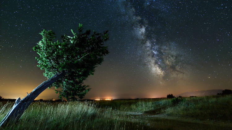 Pine tree and the Milky Way