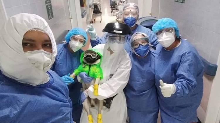 Personal médico del hospital 20 de Noviembre en México recibe terapia de un pug