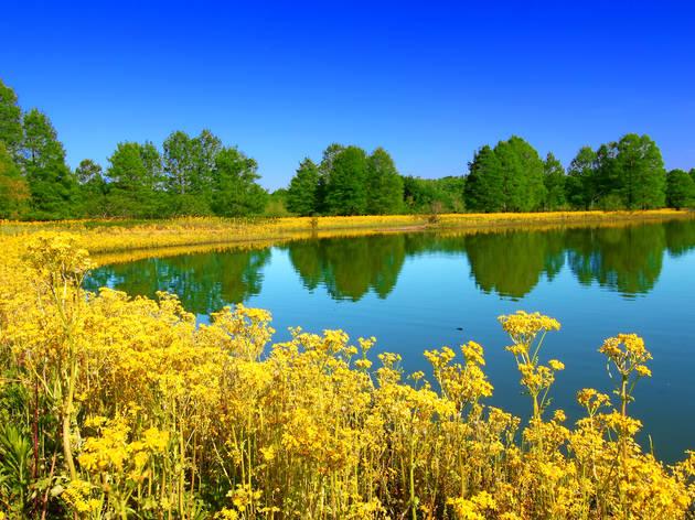 state park, illinois, Carlyle Lake at Eldon Hazlet State Park Illinois, Eldon Hazlet