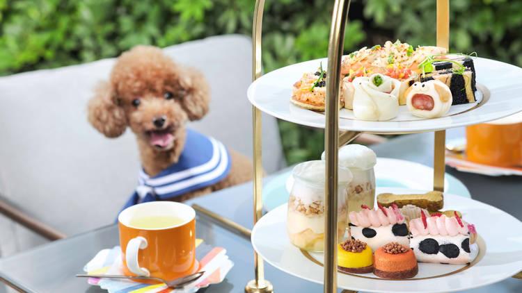 The Murray Hong Kong, Paws for tea