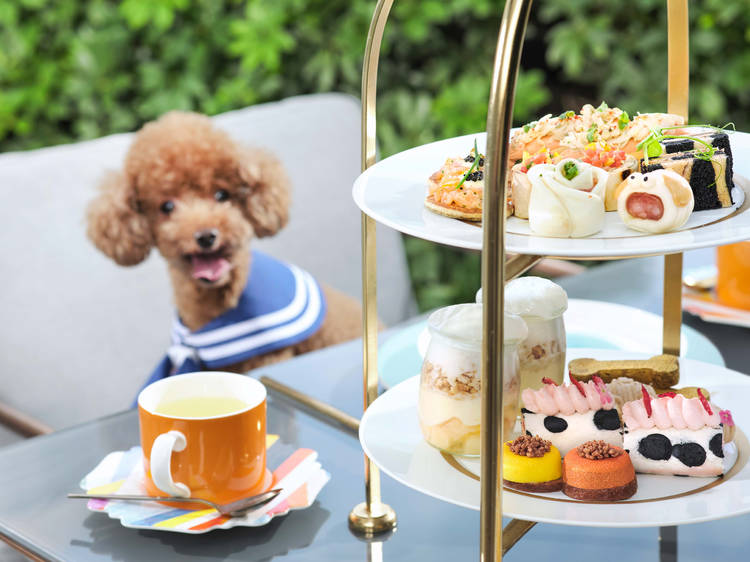 Dog-friendly restaurants and cafes in the city