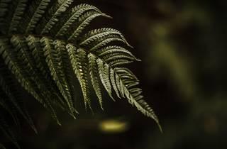'Relações botânicas' é o tema da próxima conversa