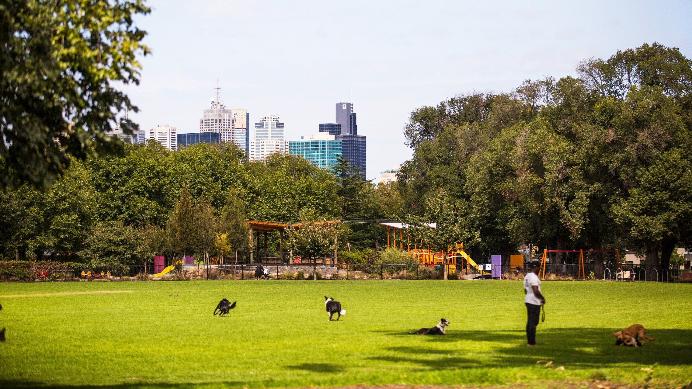 A clearing at Edinburgh Gardens in which four dogs are running around. There is a playground in the background