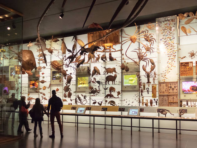 AMNH Hall of Biodiversity