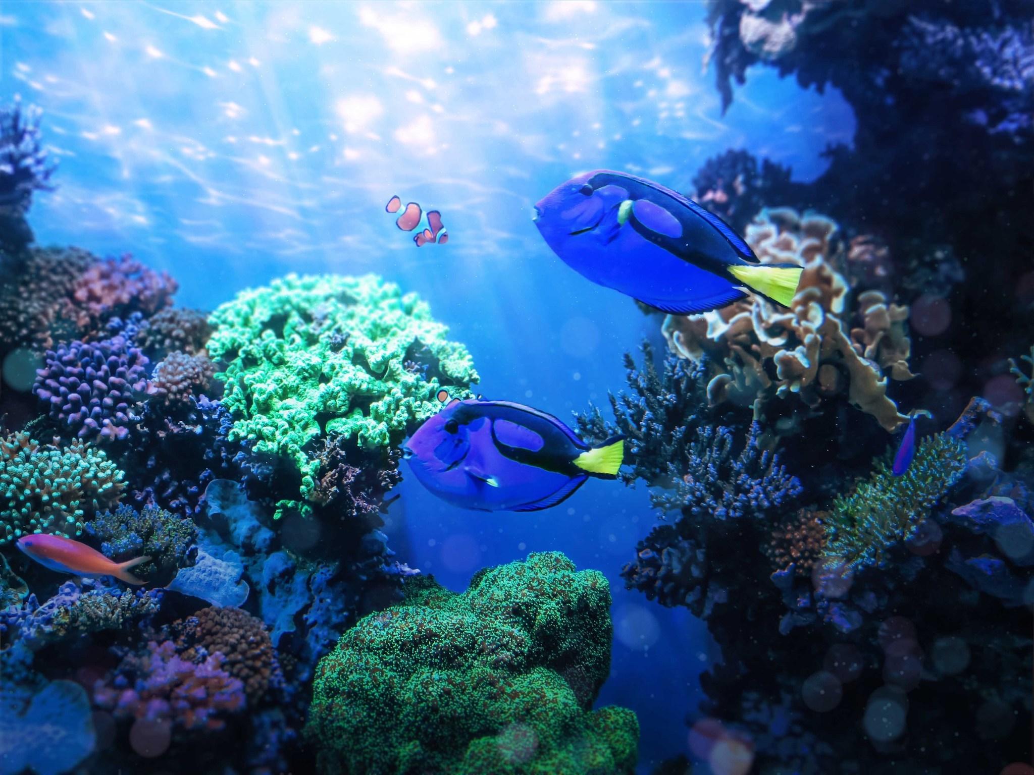 Best live aquarium cams