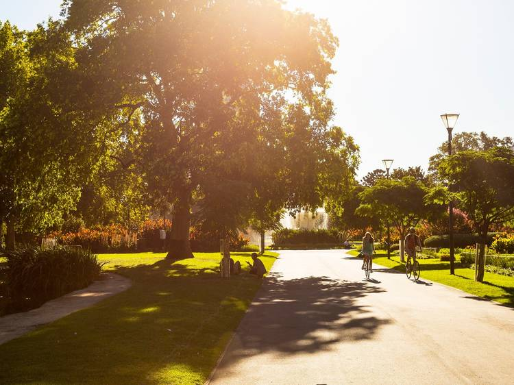 Birds and trees to spot on your next walk around Melbourne
