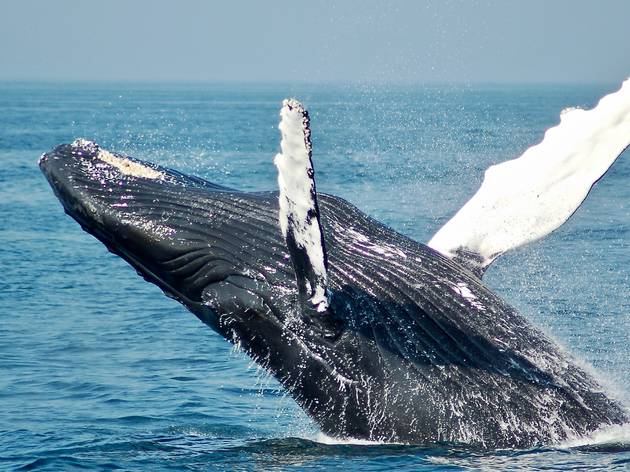 The best places to go whale watching in Sydney