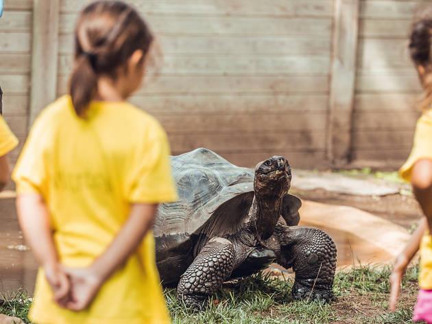 Casal d'estiu del zoo