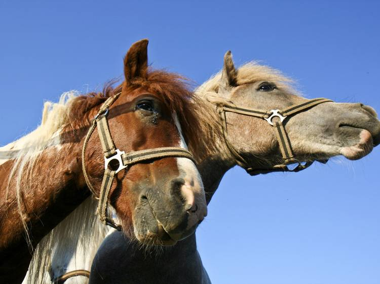 Discover nature on two wheels - or horseback