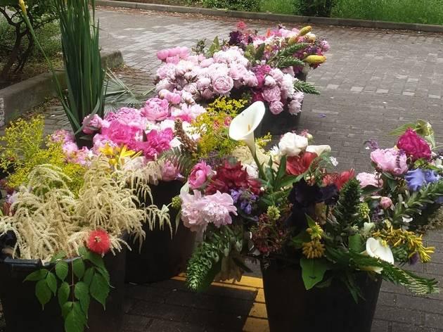 flores del Real Jardín Botánico