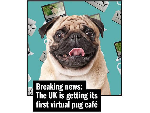 pug cafe