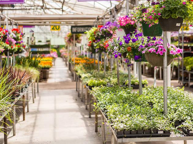 Botiga de jardineria