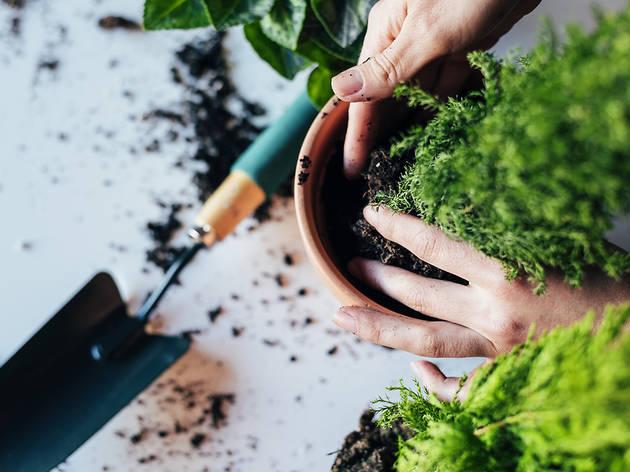 Jardineria a casa