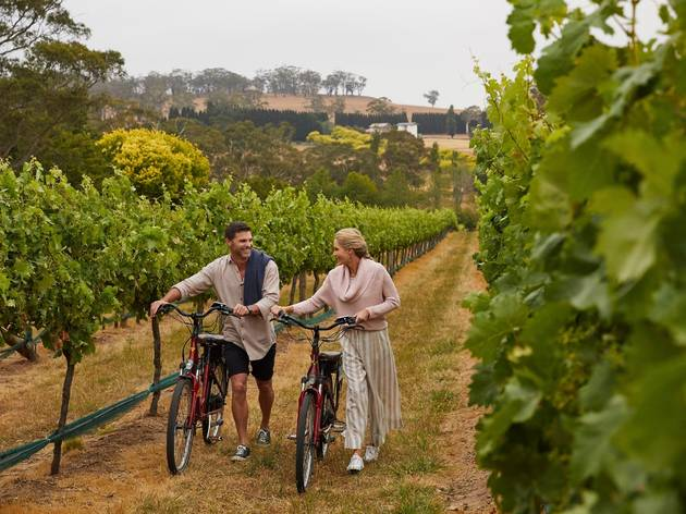 People cycling through vineyard