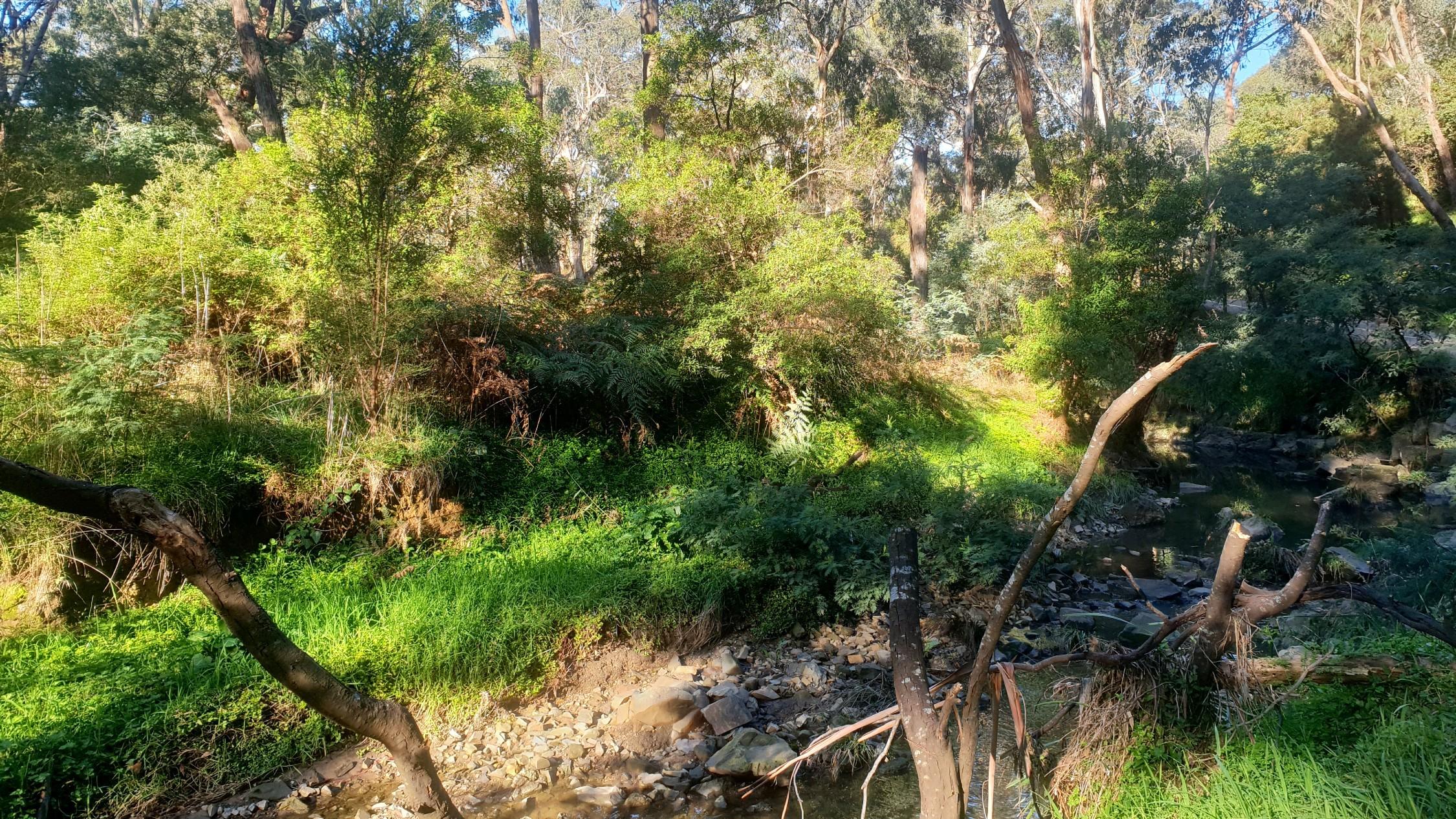 Yarran Dheran Nature Reserve