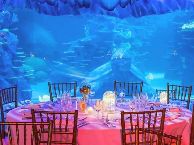 Table in front of aquarium tank