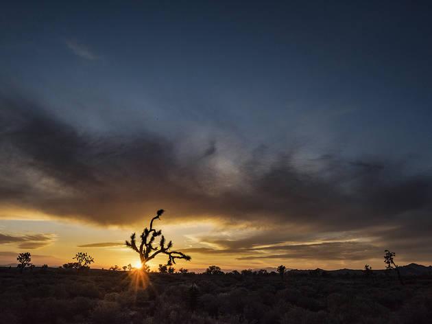 Paisaje de un amanecer en el desierto de México