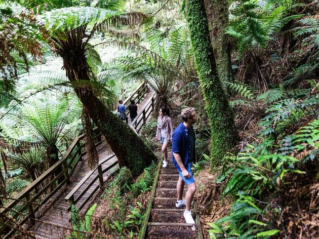 Walking through Melba Gully Rainforest, Great Otway National Park