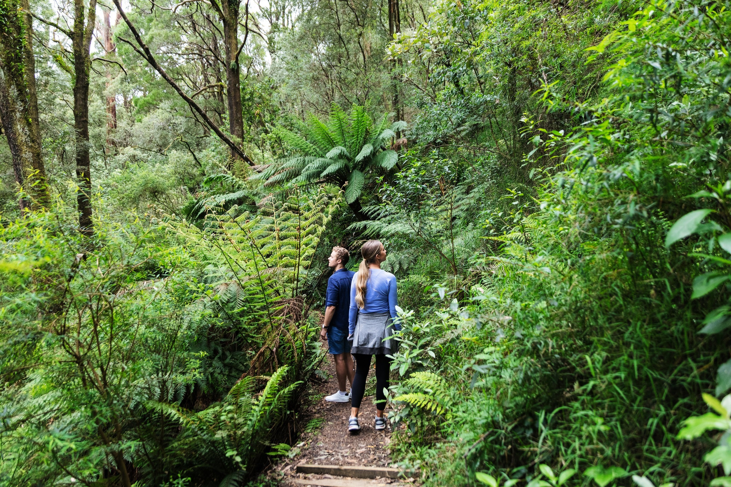 Day walks, Melba Gully rainforest, Great Otway National Park