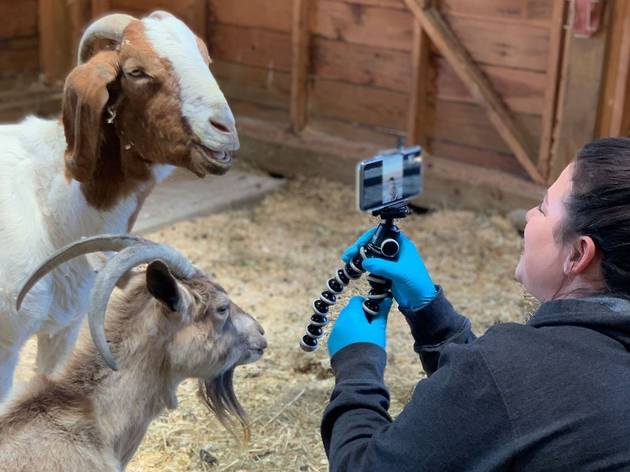 This animal sanctuary is doing live storytimes with turkeys and goats