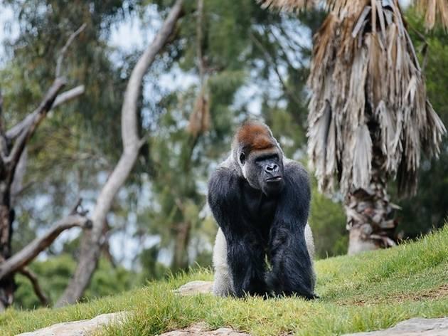 Werribee Open Range Zoo (Photograph: Supplied/Visit Werribee & Surrounds)