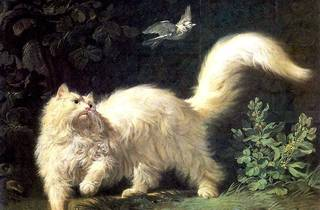 Kattenkabinet , Museo de los gatos