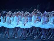 Swan Lake, English National Ballet, swans