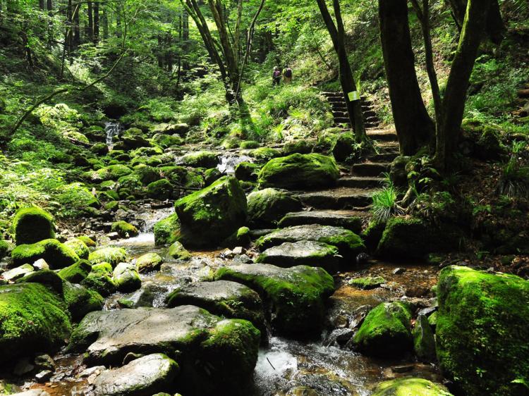 東京、自然を楽しむレジャー6選