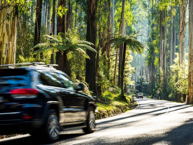 Car driving the Black Spur