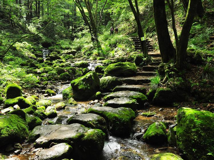 Soothe the soul with forest bathing at Okutama