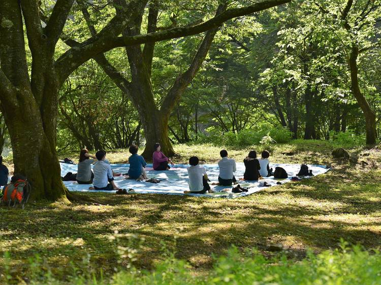 Destress with Okutama Forest Therapy