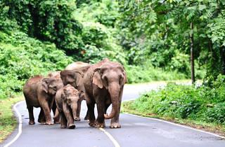 Elephants in Thailand national park