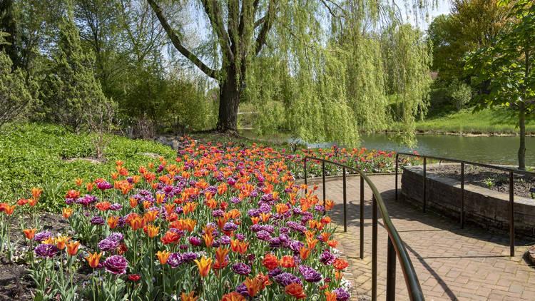 Chicago Botanic Garden, nature, garden, botanic, botanic garden